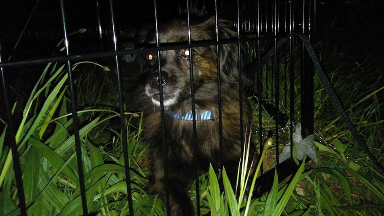 Lola, la trotamundos