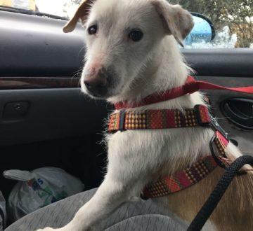 Crispin, tras 2 años de abandono, está buscando su nueva oportunidad. Es un perrito muy dulce que sólo necesita tiempo para confiar en ti.